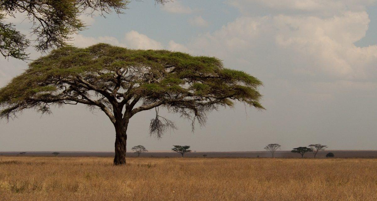 La ONU insta a integrar la industria informal forestal para evitar la deforestación de África